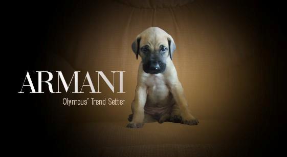 armani_banner